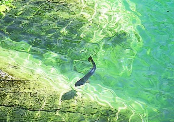 Polarized Sunglasses in Delta | Maui Jim | Maui Zeal