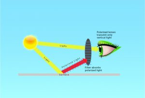 Polarization & How it Works Robertson Optical & Optometry